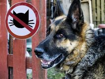 German Shepherd On The Background Of The Sign No Entry Cats. Stock Images