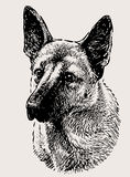 German shepherd portrait Stock Image