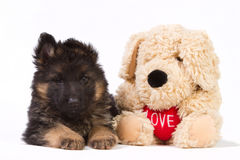 German shepherd pup with pluche dog. German shepherd pup with a pluche dog with heart Royalty Free Stock Photo
