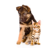 German shepherd puppy and bengal kitten looking away. isolated Stock Images
