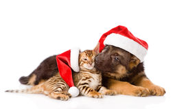 German shepherd puppy and bengal kitten sitting in profile. isolated stock image