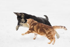 German Shepherd puppy and cat Stock Photos