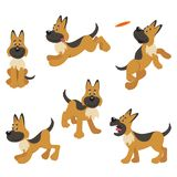 German Shepherd Puppy Dog Poses Stock Photos