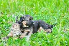 German shepherd puppy embracing tiny kitten on green grass royalty free stock photos