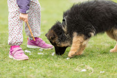 German shepherd puppy and girl Royalty Free Stock Images