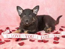 I Love You Puppy Stock Images