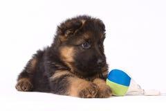 German shepherd puppy isolated on white. German shepherd puppy with toy isolated on white Stock Image