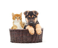 German Shepherd puppy and kitten in a straw basket Stock Photography