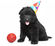 German shepherd puppy in party cone Stock Images