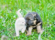 German shepherd puppy playing with tiny kitten on green grass royalty free stock image