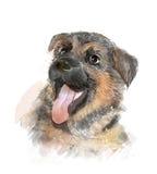 German shepherd puppy. Portrait of the german shepherd puppy Stock Image