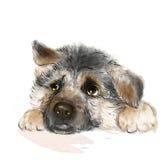 German shepherd puppy. Portrait of the german shepherd puppy vector illustration