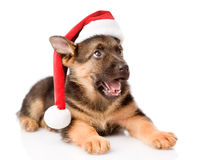 German Shepherd puppy with red hat looking up.  on white Stock Image