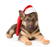German Shepherd puppy with red hat.  on white background Stock Photo