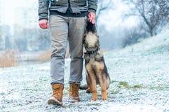 German shepherd puppy training stock images