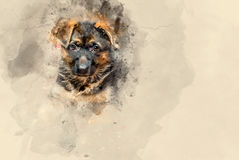 German shepherd puppy. Watercolor background Royalty Free Stock Photography