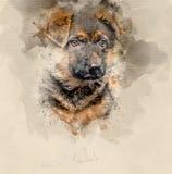 German shepherd puppy. Watercolor background Royalty Free Stock Photos