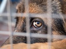German shepherd sitting locked in a cage. Close up. Selective focus Stock Images