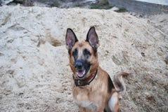 German Shepherd sitting in the sand Royalty Free Stock Image