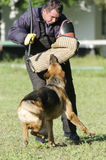 German shepherd training competition Royalty Free Stock Photography