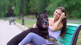 German Shepherd with a woman in the nature. stock video