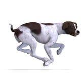 German Short Hair Dog Stock Photography