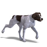 German Short Hair Dog. 3D Rendering With Clipping Stock Images