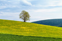 German Spring Countryside Landscape Stock Image