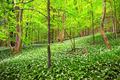 German Spring Forest Stock Photo
