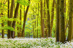 German Spring Forest Stock Images
