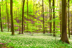 German Spring Forest Stock Photos