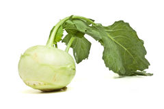 German Turnip. With leaf from low perspective isolated on white Stock Image
