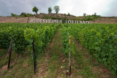 German Vineyard Royalty Free Stock Photography