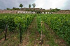 German Vineyard. Vinyard in the middle Rheine area near Rudesheim, Germany Royalty Free Stock Photography