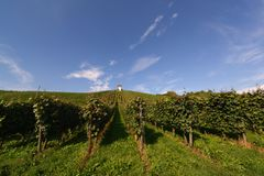 German vineyard Stock Photos