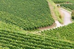 German vineyard Stock Photography