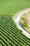 German vineyard Stock Images