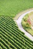 German vineyard Stock Images