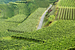 German vineyard Royalty Free Stock Image