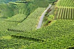 German vineyard Royalty Free Stock Image