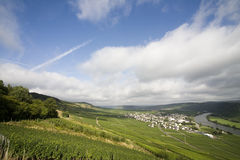 German vineyard Royalty Free Stock Images