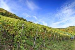 German vineyard scene Stock Image