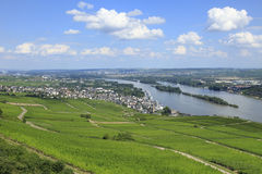 German Vineyards. On the Rhine River Valley stock photos