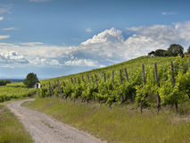 German wine yard Stock Photography