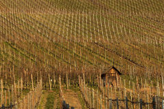 German winery hills Royalty Free Stock Photos