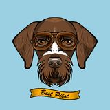 German Wirehaired Pointer dog Pilot. Aviator Glasses. Best pilot lettering. Vector. German Wirehaired Pointer dog Pilot. Aviator Glasses. Best pilot lettering Royalty Free Stock Photography