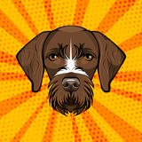 German Wirehaired Pointer. Huntind dog. Drachhaar. Vector Illustration. Dog Portrait. German Wirehaired Pointer. Huntind dog. Drachaar Dog breed. Brown face of Stock Images