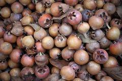 Germanica común del Mespilus del níspero, alimento biológico sano de la naturaleza, níspero textura orgánica fresca del fondo de  fotografía de archivo