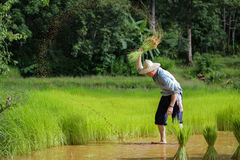 The Germans are farming in Thailand Stock Image