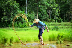 The Germans are farming in Thailand Royalty Free Stock Images